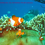 Paket Snorkeling gili ketapang probolinggo 2017
