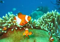 Paket snorkeling gili ketapang probolinggo